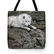 Arctic Wolf Pictures 1142 Tote Bag