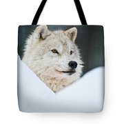 Arctic Wolf Pictures 1144 Tote Bag