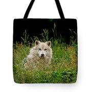 Arctic Wolf Pictures 1172 Tote Bag