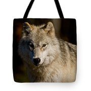 Arctic Wolf Pictures 1224 Tote Bag