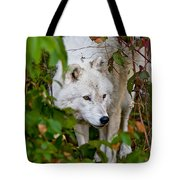 Arctic Wolf Pictures 1228 Tote Bag