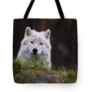 Arctic Wolf Pictures 208 Tote Bag