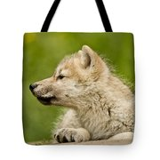 Arctic Wolf Pictures 340 Tote Bag