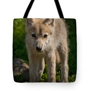 Arctic Wolf Pictures 345 Tote Bag