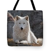 Arctic Wolf Pictures 518 Tote Bag