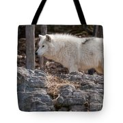 Arctic Wolf Pictures 525 Tote Bag