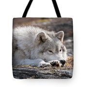 Arctic Wolf Pictures 526 Tote Bag