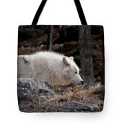 Arctic Wolf Pictures 541 Tote Bag