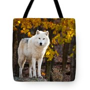 Arctic Wolf Pictures 709 Tote Bag