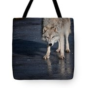 Arctic Wolf Pictures 766 Tote Bag