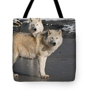 Arctic Wolf Pictures 812 Tote Bag