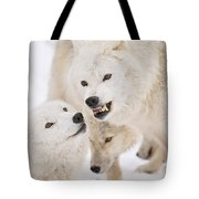 Arctic Wolf Pictures 872 Tote Bag