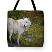 Arctic Wolf Pictures 922 Tote Bag