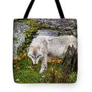 Arctic Wolf Pictures 927 Tote Bag