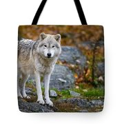 Arctic Wolf Pictures 942 Tote Bag