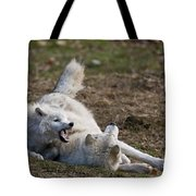 Arctic Wolf Pictures 996 Tote Bag
