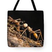 Army Ant Carrying Cricket La Selva Tote Bag