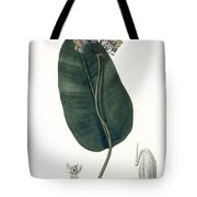 Asclepias Syriaca From Phytographie Tote Bag