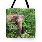 Asian Elephant  Elephas Maximus Tote Bag