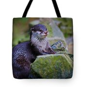 Asian Small Clawed Otter Tote Bag