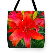 Asiatic Hybrid Lily Tote Bag