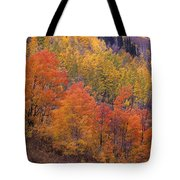 Aspen Grove In Fall Colors Tote Bag