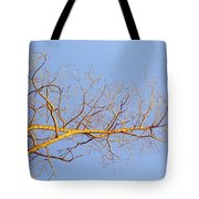 Aspen In The  Autumn Sun Tote Bag