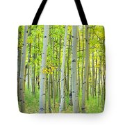 Aspen Tree Forest Autumn Time  Tote Bag