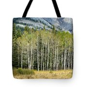 Aspen Trees Along The Bow Valley Tote Bag