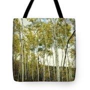 Aspen Trees In Spring  Tote Bag