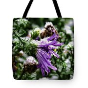 Aster In First Snow Fall 2- Tote Bag