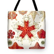 Asteridea Tote Bag