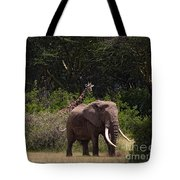 At The Foot Of Kilimanjaro Tote Bag