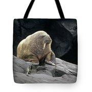 Atlantic Walrus Bull On Rocky Shore Tote Bag