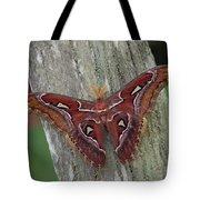Atlas Moth Portrait Asia Tote Bag