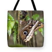 Atreus Owl Portrait  Costa Rica Tote Bag