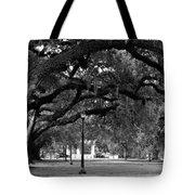 Audubon Park Oaks Tote Bag