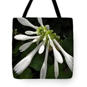 August Lily Tote Bag