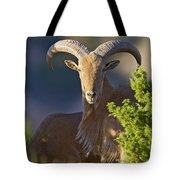 Auodad Ram On Watch Tote Bag
