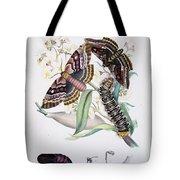 Australian Butterflies Tote Bag by Philip Ralley