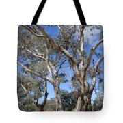 Australian Native Tree 12 Tote Bag