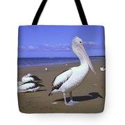 Australian Pelican On Beach Tote Bag