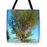 Australian Pine At Sundown Tote Bag