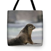 Australian Sea Lion On Beach Kangaroo Tote Bag