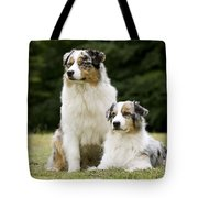Australian Shepherd Dogs Tote Bag