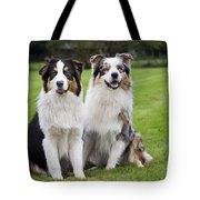 Australian Shepherds Tote Bag
