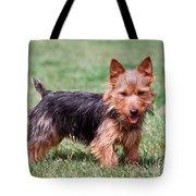 Australian Terrier Dog Tote Bag