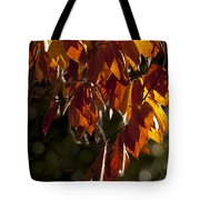 Autumn Beech Leaves Tote Bag