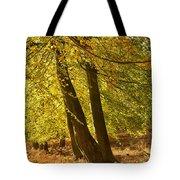 Autumn Beeches Tote Bag