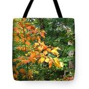 Autumn Begins At Breakheart Reservation Tote Bag